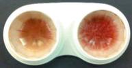 バイオフィルムを赤茶色に染色