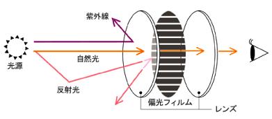 偏光レンズの仕組み